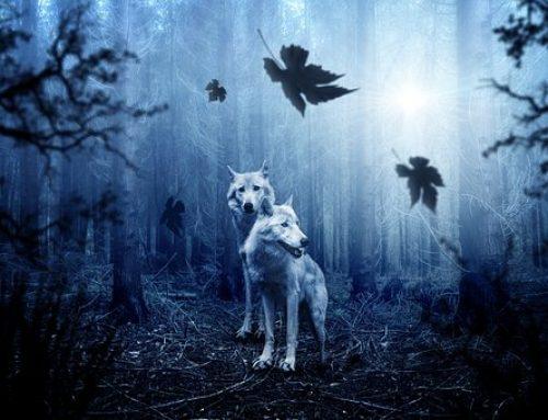 Loup de vie